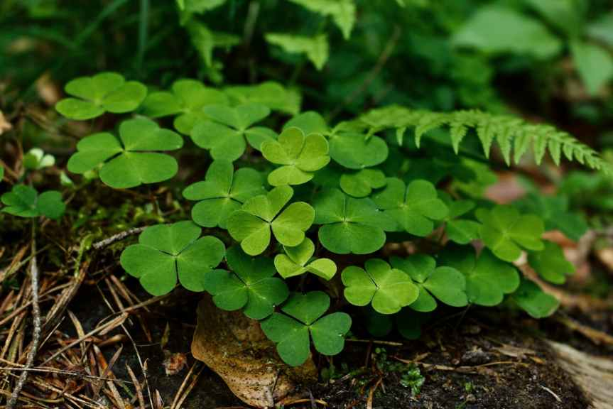 40 Irish Proverbs + the Respective Meanings   Leverage Ambition