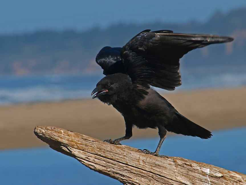 5 Crows That Bother Me | Leverage Ambition