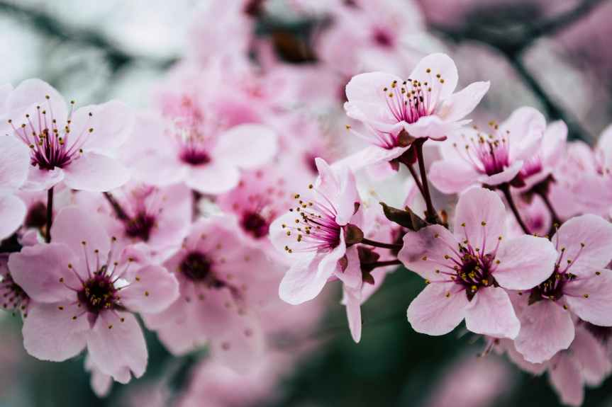 32 Quotes About How the Spring Season Has Sprung | Leverage Ambition