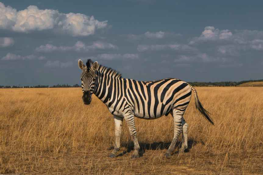 How to Be A Zany Zebra & Spark Productivity This Summer Season | Leverage Ambition