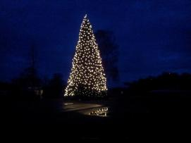 Weihnachtsbaum-Schiffswerft-2014-21
