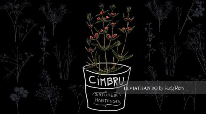 ciumurică, lămâioară, lămâiţă, piperniță-de-grădină, cimbru adevărat, cimbru bun, cimbru mirositor, cimbru păsăresc, timbrişoare, piman, ajedrea de jardin, saborea, savory, savoreggia, sarrriette, herbe à fèves, herbe des satyres, tragorigni