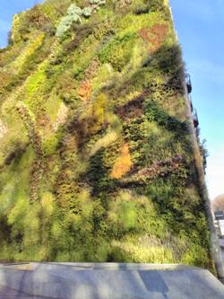 Hotel Mora - Jardin Vertical Garden