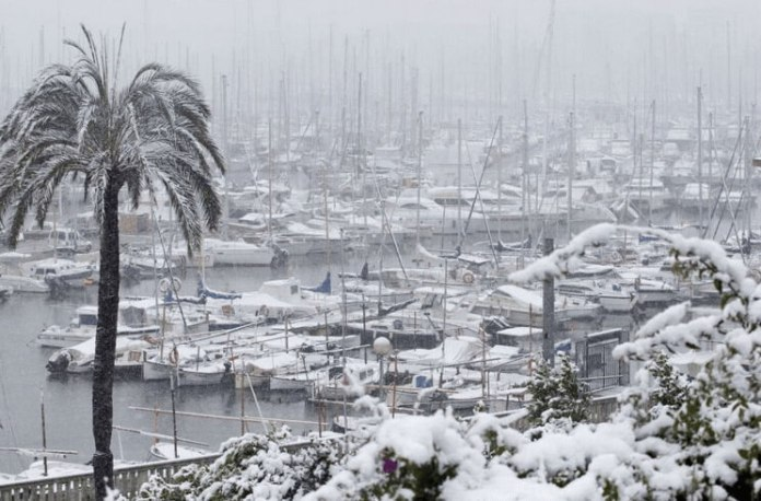 Palma-nieve
