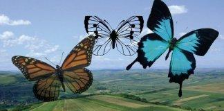 marui de florentina loredana dalian fluturi viata