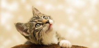 ziua mondiala a pisicii