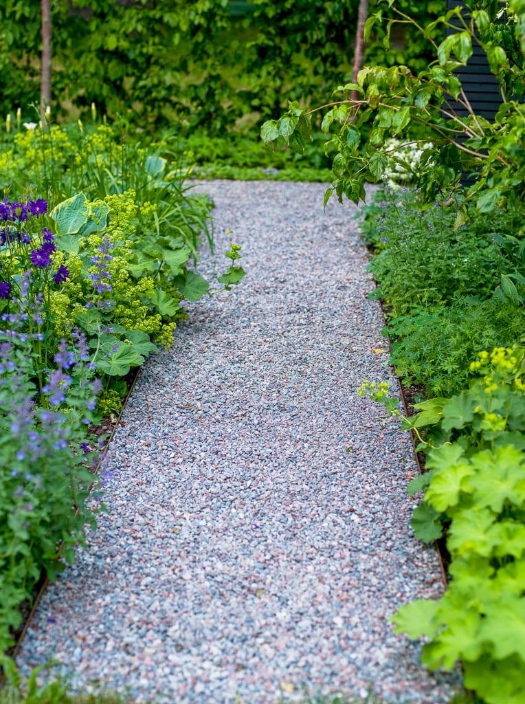 Grusgång och plantering i grönt, lime och violett. Komposition av trädgårdsarkitekt Ulrika Levin.