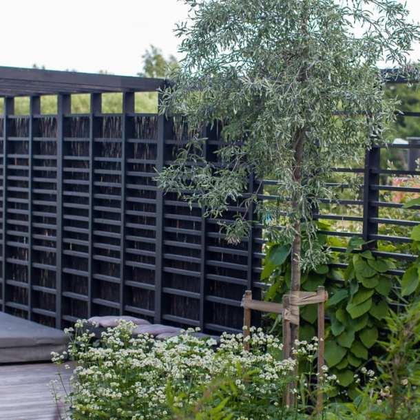 Svart pergola och spaljé. Vår trädgårdsarkitekt Ulrika Levin har designat.
