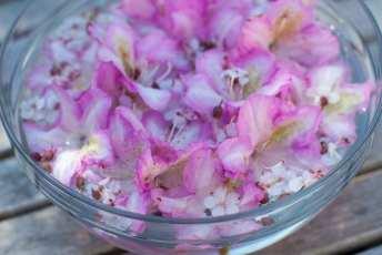 Rhododendron och nävor. Levins Trädgård & Design.