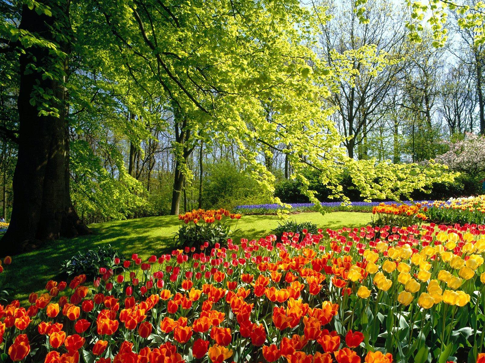 spring.jpg (1600×1200)