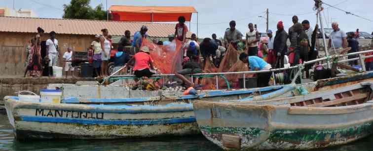 Retour de pêche - Palmeira- SAL