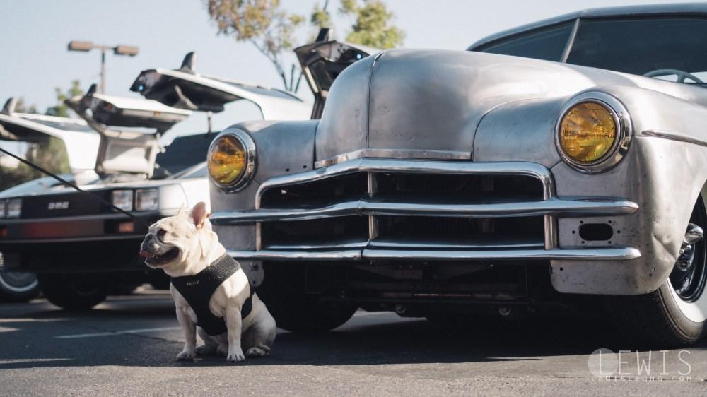 Mr. Beauregard, the french bulldog