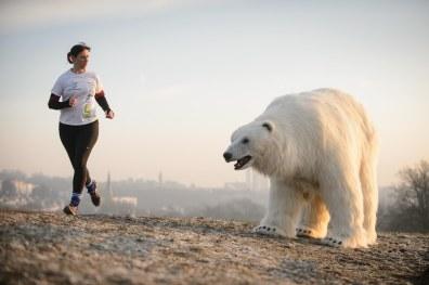 Polar_Bear_Hampstead-6