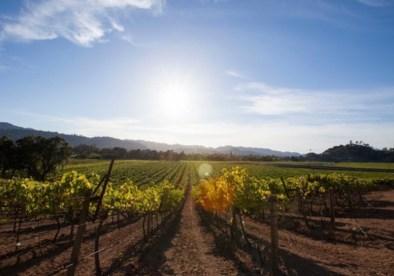 Kenefick Ranch Winery 1