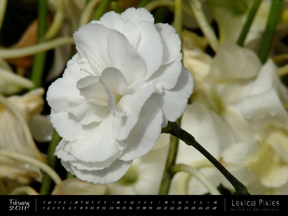 Desktop Wallpaper Calendar: 2011 Nature Theme: Flowers (2/6)