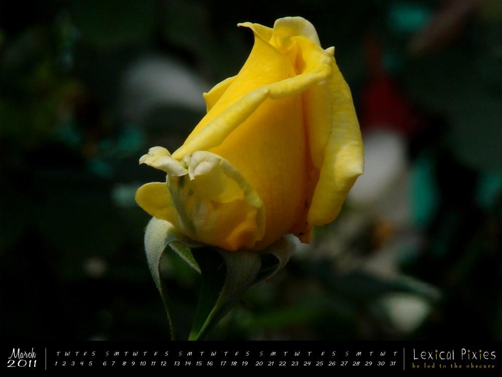 Desktop Wallpaper Calendar: 2011 Nature Theme: Flowers (3/6)