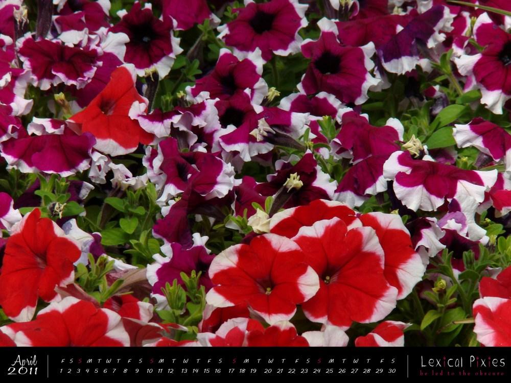 Desktop Wallpaper Calendar: 2011 Nature Theme: Flowers (4/6)