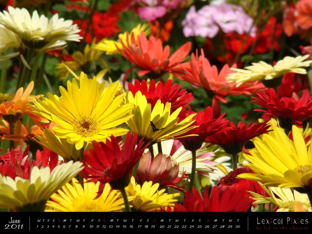 Desktop Wallpaper Calendar: 2011 Nature Theme: Flowers (6/6)