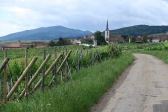 Wijnvelden in de Vogezen
