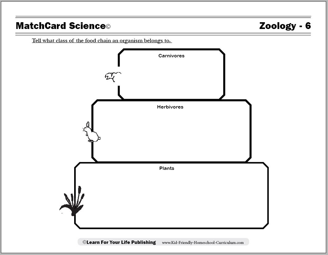 Food Chain Printable Worksheets