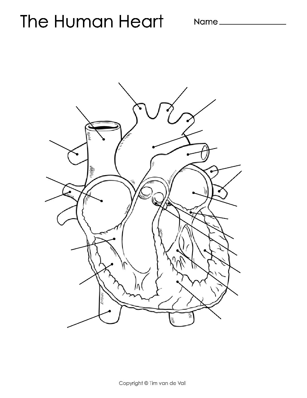 Heart Diagram Printable Worksheet