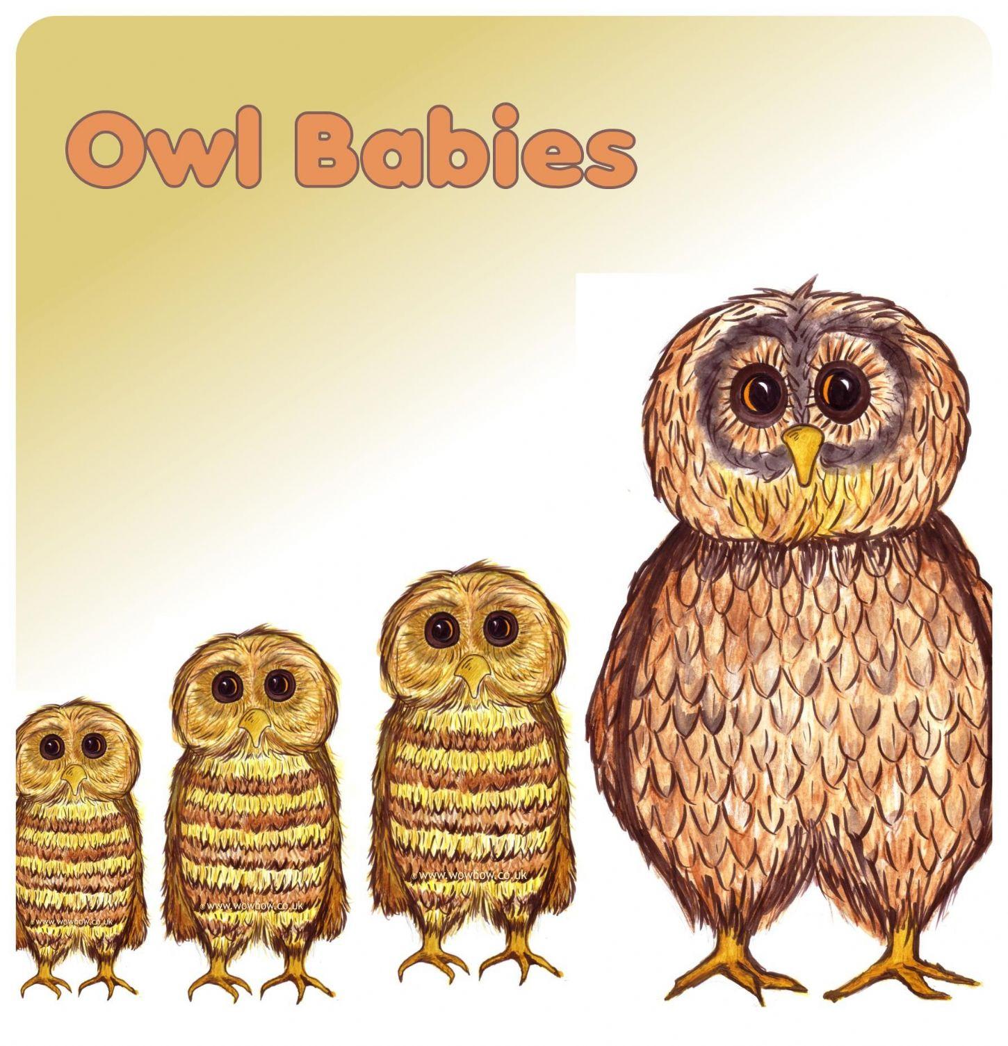 Baby Owl Dot To Dot Printable Worksheet