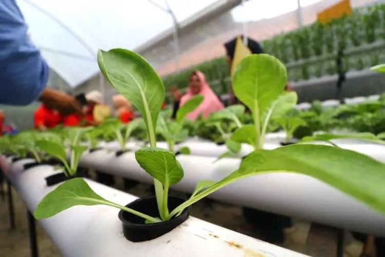 Manfaat Hidroponik Untuk Lingkungan