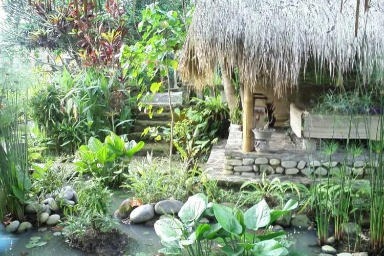 Tanaman Air Sebagai Penghias Taman Rumah