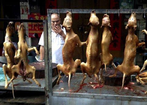 Festival de carne de cachorro começa na China; veja outros países que aderem à prática polêmica