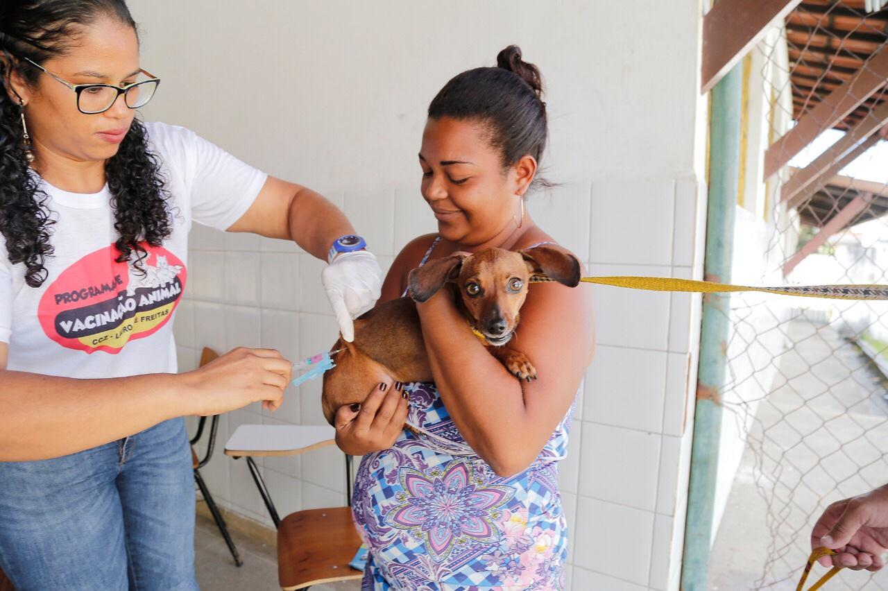 Lauro de Freitas imunizou contra a raiva mais de 21 mil animais em 2018
