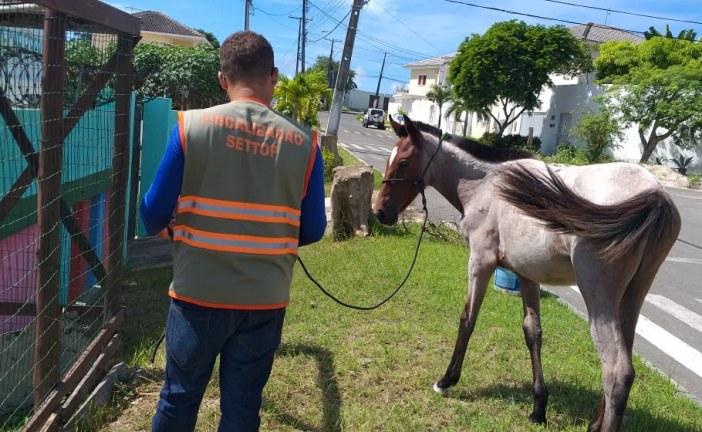 Equipe da Settop retira e acolhe cavalo que estava solto na via