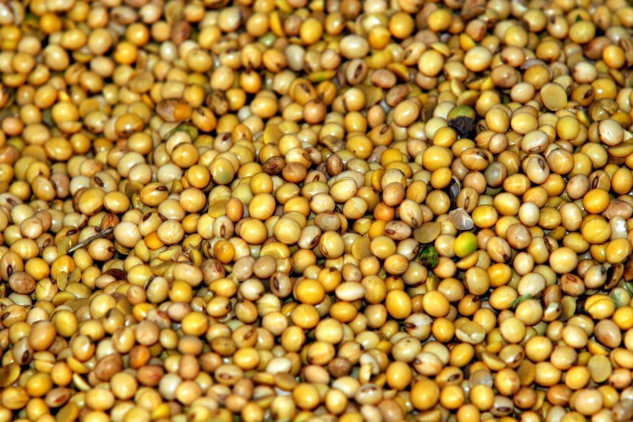 Entidades governamentais e sociedade debatem cadeia produtiva da soja