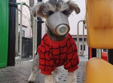 Teste detecta coronavírus em cachorro em Hong Kong; novos exames serão feitos