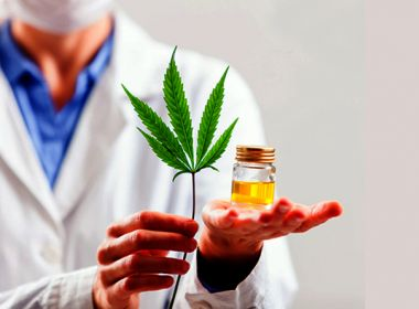 Projeto de lei propõe o cultivo da Cannabis medicinal no Brasil