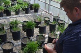Transplanting seeds in the greenhouse