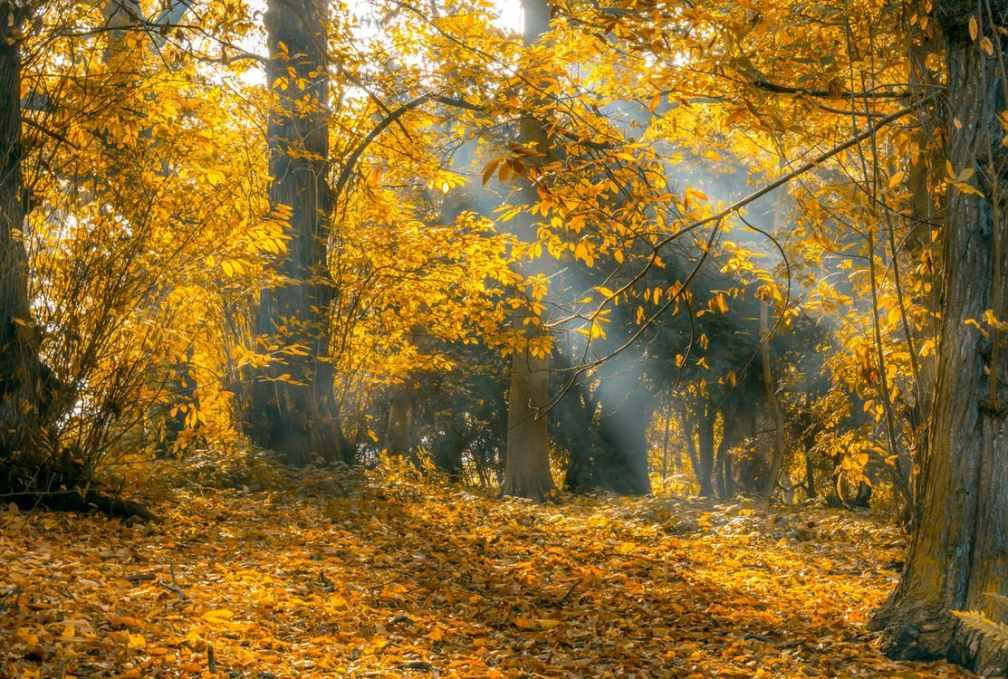 Höstens naturvårdsdag 12 oktober