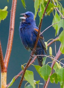 Second Saturday Bird Walk @ Lehigh Gap Nature Center