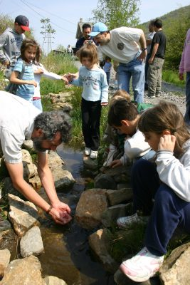 Curious Naturalist Workshops