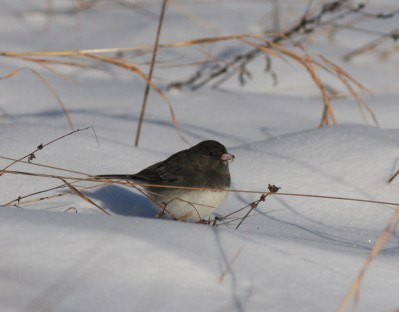 Winter Bird Survey