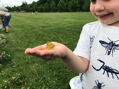 Four B Walks (Bugs, Butterflies, Birds, and Blooms) with Doug Burton