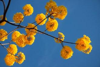 Delicados ramos de flores