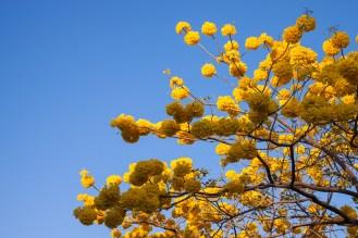 Desde cualquier ángulo, los bombones amarillos sorprenden a cualquiera