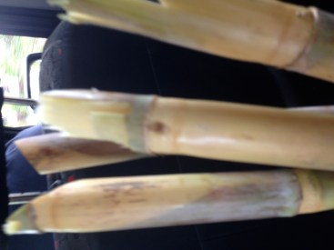 Sugarcane as a gift