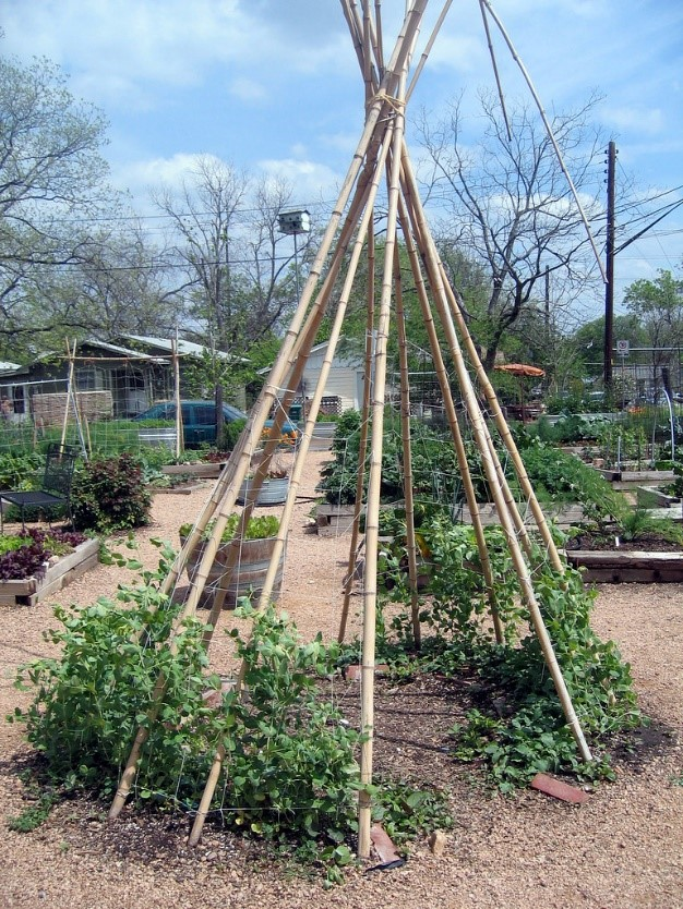 Photo of tepee with growing plants