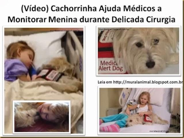 Vídeo) Cachorrinha Ajuda Médicos a Monitorar