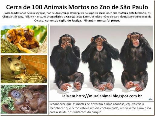 Cerca de 100 Animais Mortos no Zoo de