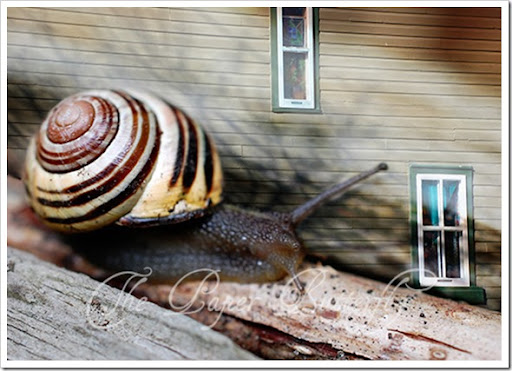 SNAIL HOUSE 57 WM