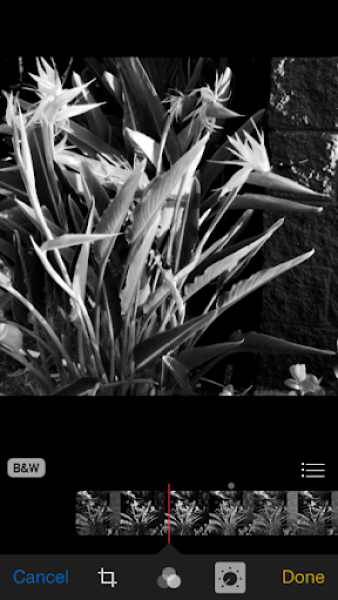 iOS 8 photos app black and white oopsy