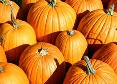 pumpkins-487x350