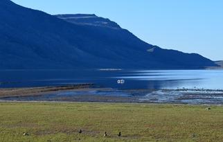 waterfowl on Hart Lake